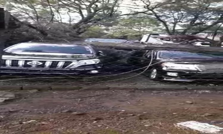 Falling Trees Destroy Prados Worth Millions At CarMax Along Ngong Road